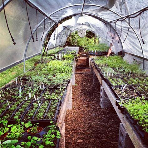 list  vegetables herbs  fruits   grow