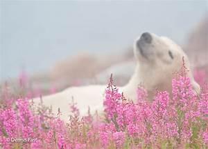 1000 idees sur le theme bebe ours polaires sur pinterest With affiche chambre bébé avec tapis d acupression champ de fleurs