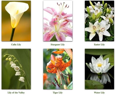 names of different lilies an ending of a life well lived lenormand 5 card spread golden mousedeer