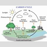 Oxygen And Carbon Dioxide Cycle Simple | 400 x 304 png 112kB