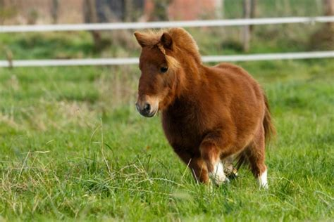 hufrehe beim pferd vorbeugen