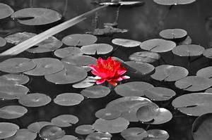 Schwarz Weiß Bilder Mit Farbeffekt Kaufen : papic schwarz wei fotos mit rotem farbeffekt ~ Bigdaddyawards.com Haus und Dekorationen