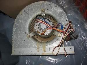 Hvac Squirrel Cage Blower Wiring : mycotopia web archive how to wire a squirrel cage blower ~ A.2002-acura-tl-radio.info Haus und Dekorationen