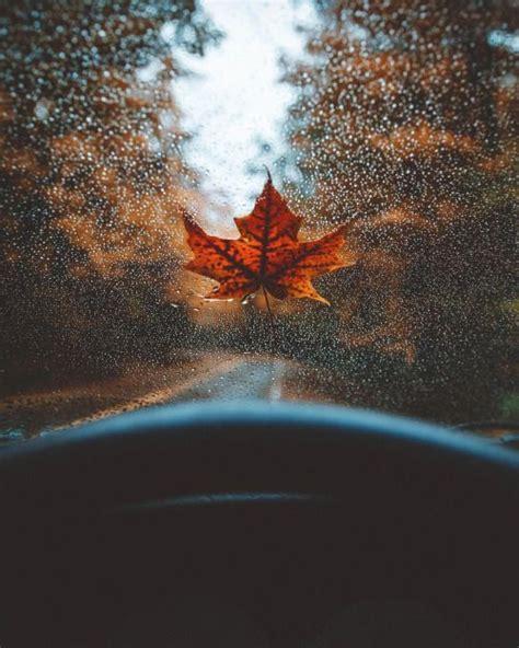 pinterest chandlerjocleve     autumn photography