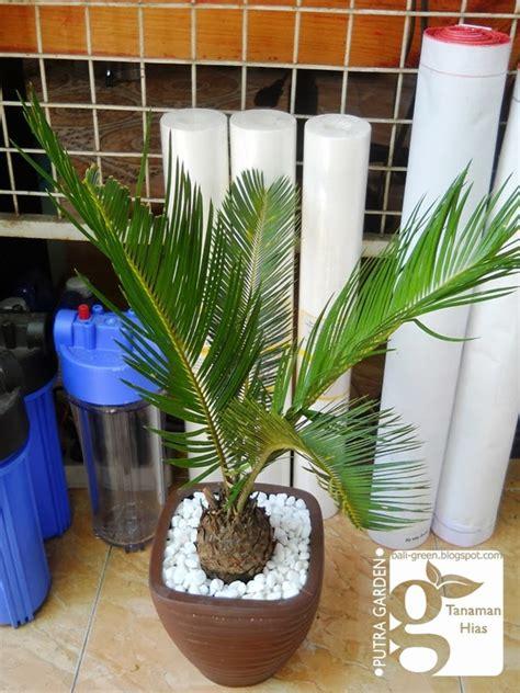 jual tanaman plastik tanamanbaru