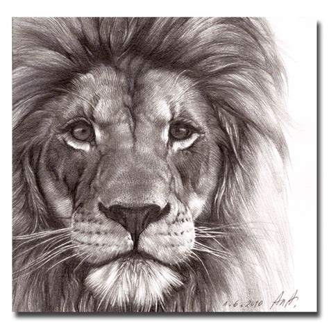 lion face drawing graphite animal tattoo drawn pic litle