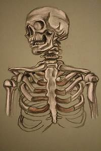 skeleton study sketch by AdamHallart on DeviantArt