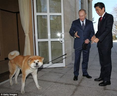 putin  bring  heel devil dog   shows