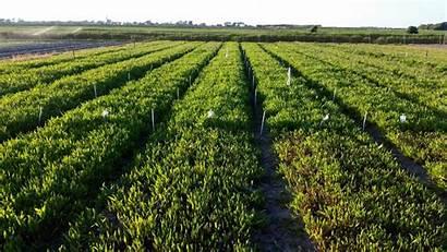 Pertanian Salina Agricultura Hubungi Kami