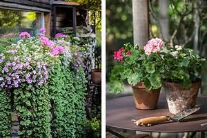 mit dauerbluhern von fruhling bis herbst farbige akzente With französischer balkon mit welche blumen blühen den ganzen sommer im garten