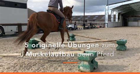 muskelaufbau beim pferd  einfache uebungen pferde