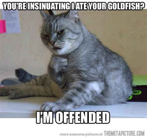 Funny Memes Pictures Tumblr - hilarious cat memes tumblr image memes at relatably com