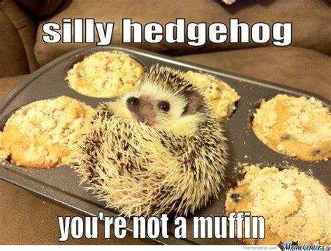 Hedgehog Meme - 25 adorable hedgehog memes
