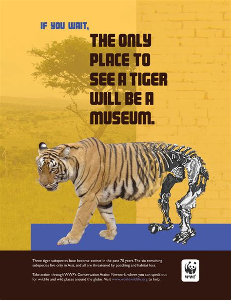 Billboard Magazine world wildlife fund elizabeth strunk designs 670 x 873 · jpeg