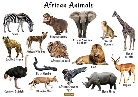 South african histroy was cool. African Animals List, Facts, Conservation Status, Pictures