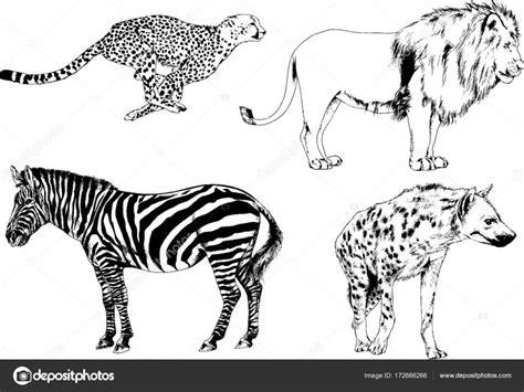 Kleurplaat Roofdieren by Set Vector Tekeningen Rond Het Thema Voor Roofdieren