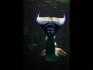 real mermaid footage - YouTube