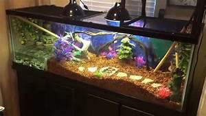 Chinese Water Dragon Terrarium Setup - YouTube