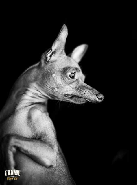 dog dog photography animals beautiful tuna