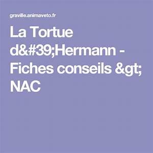 La Tortue D U0026 39 Hermann