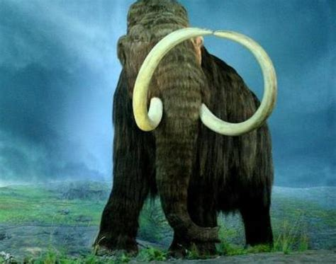 Picture 1 of 6 - Woolly Mammoth (Mammuthus Primigenius