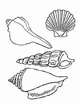 Seashell Coloring Shells Sea Pages Seashells Printable Drawing Types Template Four Ocean Line Colornimbus Under Clipart Drawings Sketch Templates Library sketch template