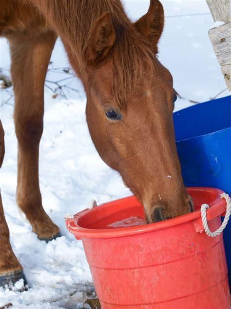 horse needs energy winter shelagh niblock equine horses