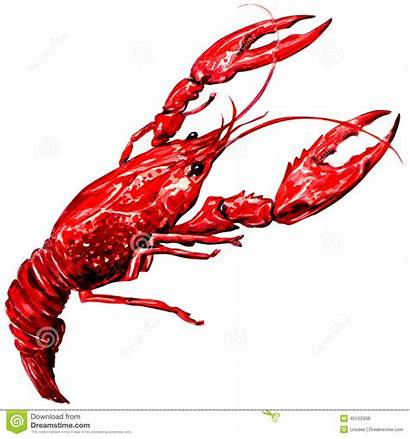 Crawfish Boiled Watercolor Painting Background Boil Drawing