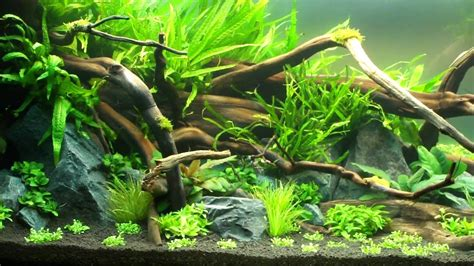 Nature Aquascape by Aquascape Quot Ground Quot