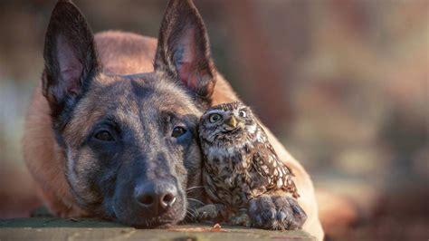 tierfreundschaft hund ingo und kauz poldi verstehen sich