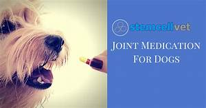 joint medication for dogs