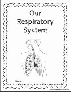 Our Precious Sprouts U0026 39  Homeschool Journal  Our Respiratory System Notebooking Pages