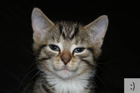 super cute kittens  emoticons
