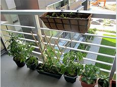 60+ Best Balcony Vegetable Garden ideas 2016 RoundPulse