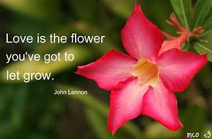 Quotes About Love And Flowers. QuotesGram