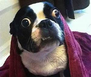 Funny Stressed Out Dogs - 24 Pics
