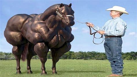 horse breeds exist believe