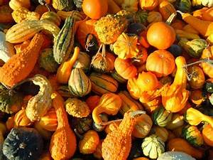 Old Zodiac Chart Gourds Types Of Gourds Growing Gourds Curing Gourds