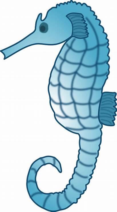 Sea Clipart Creatures Seahorse Animal