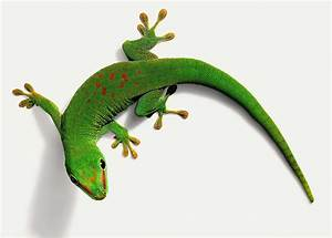 What Kind of Care Do Day Geckos Need?