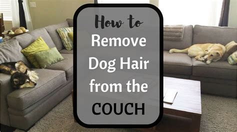 how to remove dog hair from sofa how to remove pet hair from a fabric couch with our best