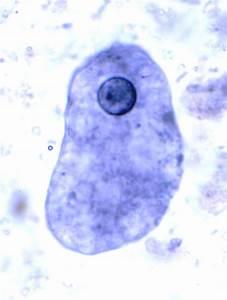 Intestinal Protozoa at Southwestern University - StudyBlue