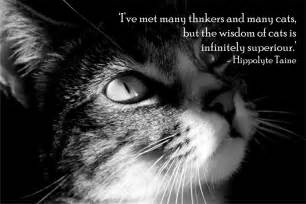quotes about cats cat quotes sayings