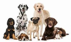 Bodenbelag Für Hunde Geeignet : chlorella f r hunde katzen pferde ~ Lizthompson.info Haus und Dekorationen