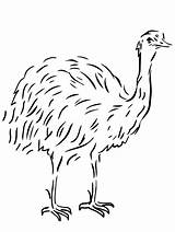 Emu Template Coloring Bird Pages Flightless Australian Animal Drawing Clipart Templates Kangaroos Printable Sketch Ausmalbild Vogel Sheet Tiere Birds Kangaroo sketch template