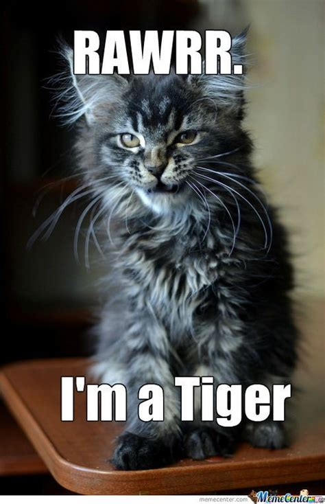 Tiger Memes - 49 funny tiger memes graphics pictures images photos picsmine