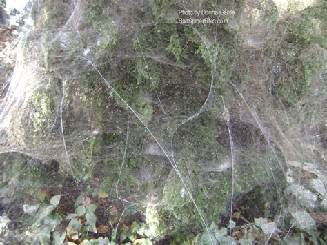 Giant Spider Webs  Badspiderbitesm. Pillars And Columns For Decorating. Outdoor Pool Decor. Home Decor Outlet. Kitchen Decorative Shelves. Rooms For Rent In Charleston Sc. Cinema Decor. Decorative Concrete Contractors. Rattan Wall Decor