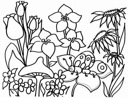Coloring Garden Flower