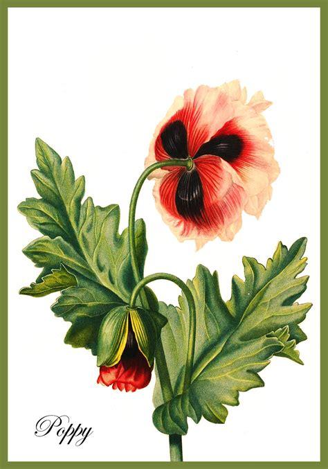 printable cards  drawings  flowers  printable