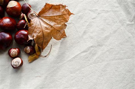 autumn background  stock photo public domain pictures